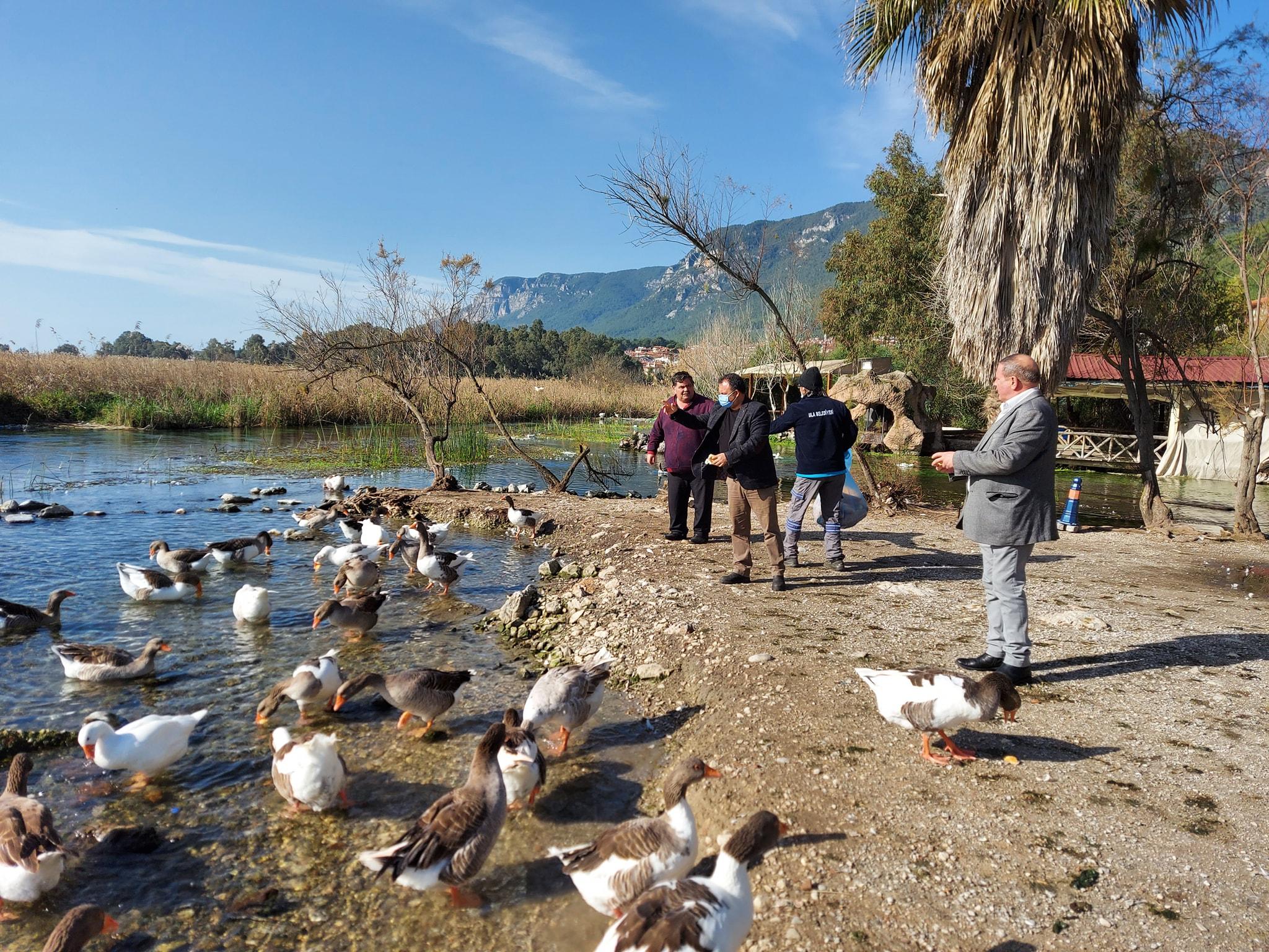 Kısıtlama Günlerinde Sokak Hayvanları Ve Azmak Nehrindeki Ördekler Unutulmadı
